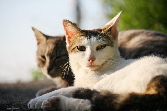 加太のネコ